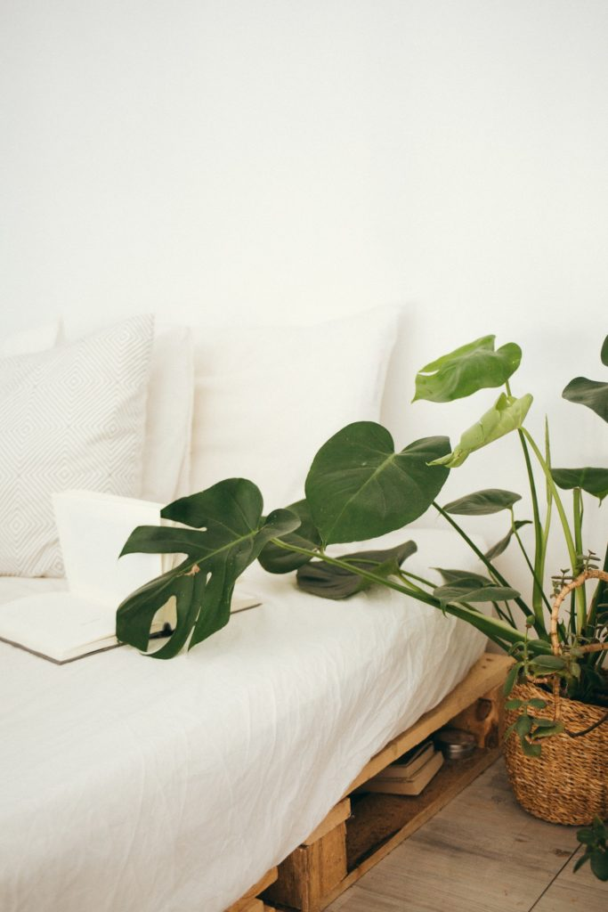 white-sofa-green-plant